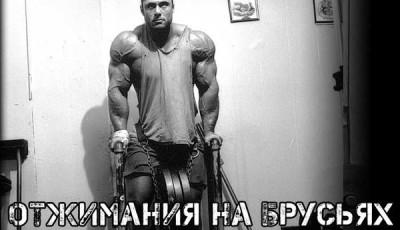 Отжимания на брусьях какие мышцы работают