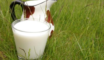 Польза домашнего молока