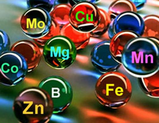 Цинк в комплексе с другими микроэлементами