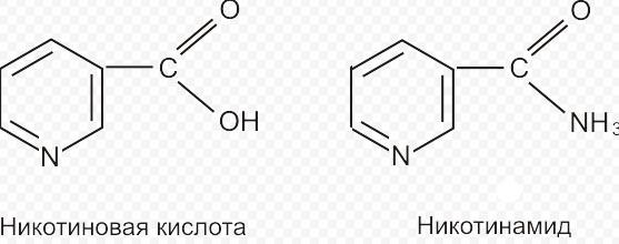 витамин PP и для чего он нужен