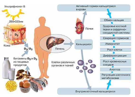кальций с витамином д