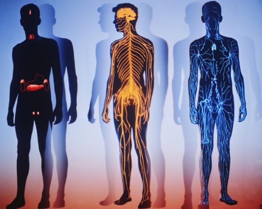 роль ванадия в организме человека